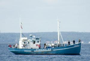 Helsingør fisk Havfiskere lystfiskere