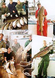Helsingør fisk Havfiskere lystfiskere fisketure